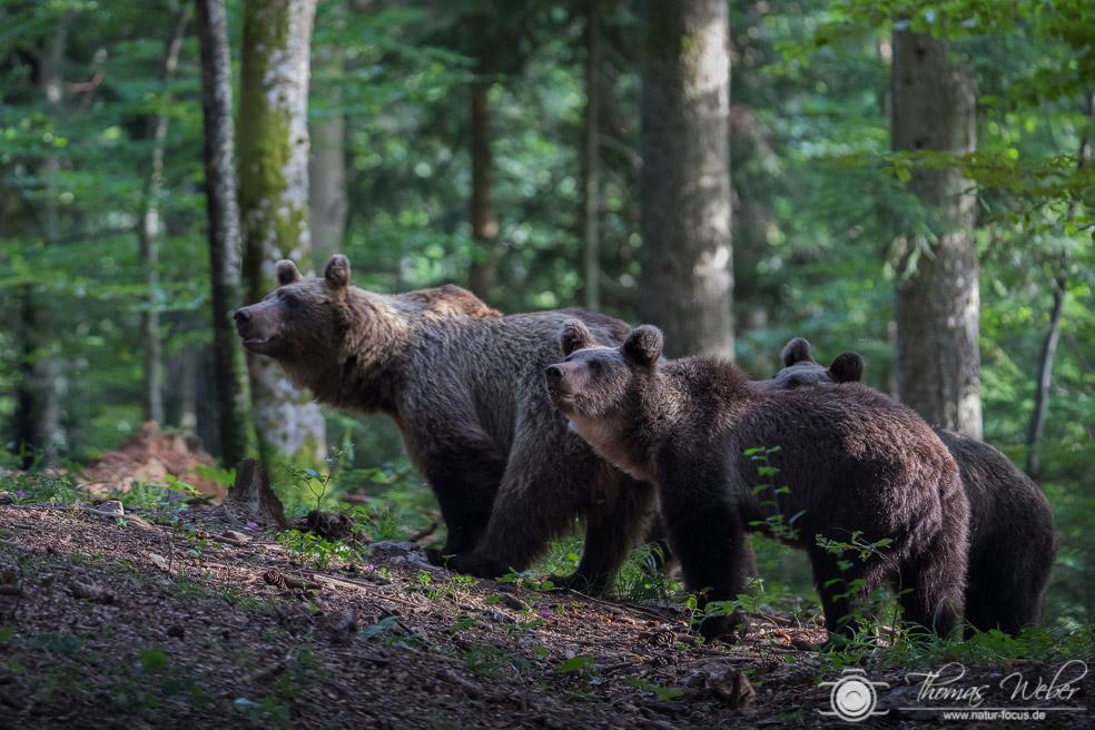 Stippvisite im Bärenland