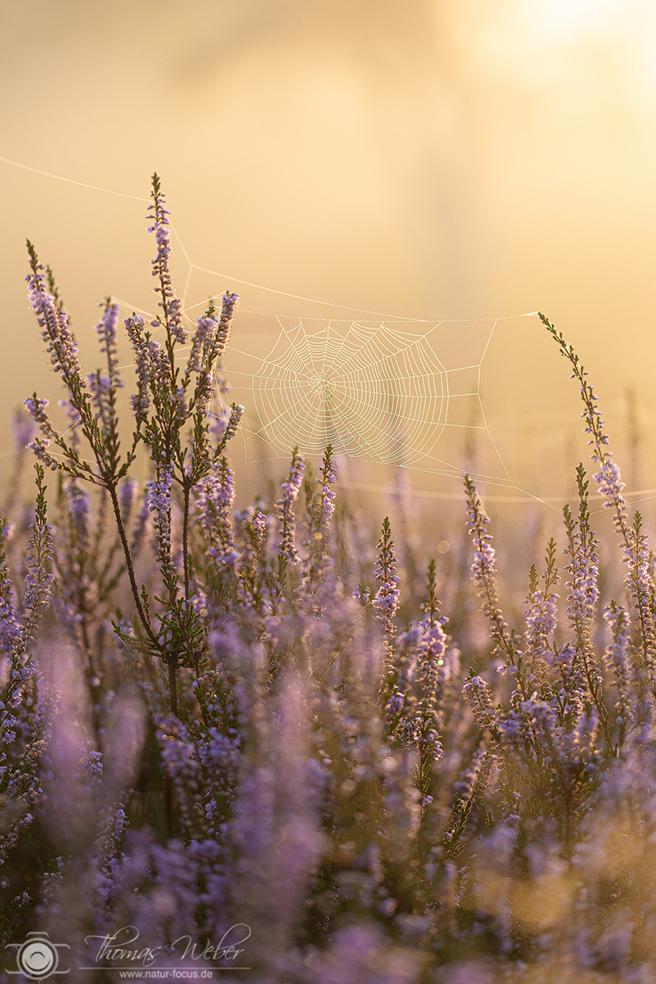 Die Magie der Heide